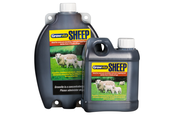 Growvite Sheep