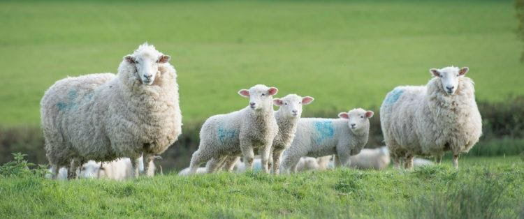 The importance of nutritional supplements for farming livestock