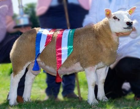 Growvite All-Ireland Texel Sheep Championships